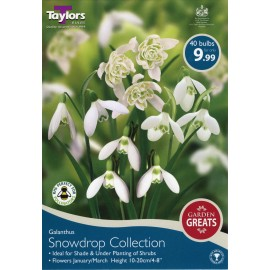Galanthus ( Snowdrop Collections)